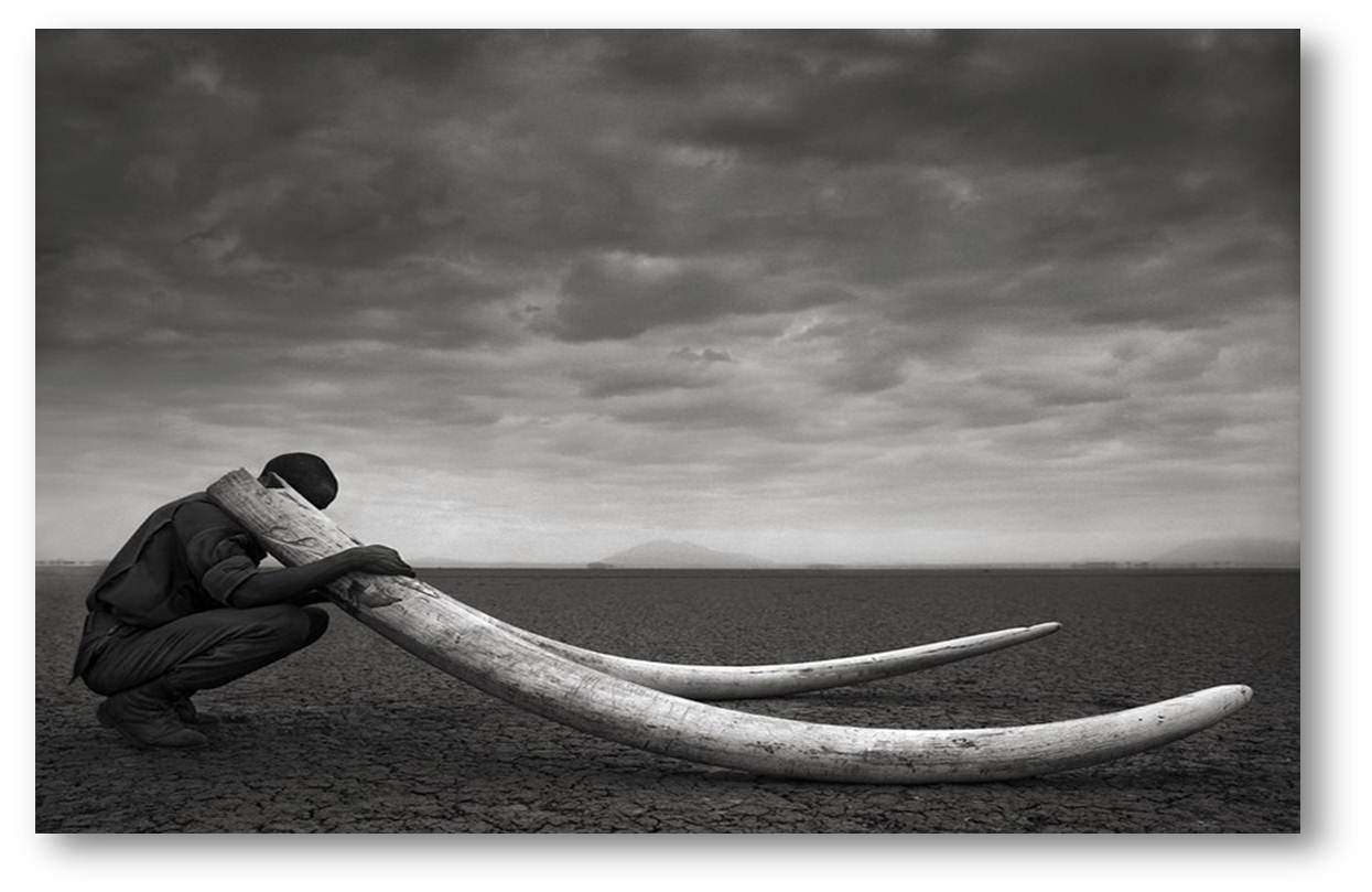Image by Nick Brandt.